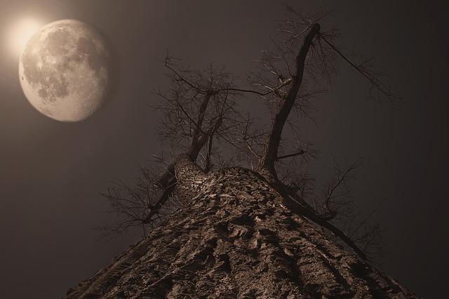 moon-596159_640